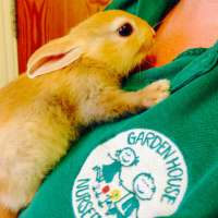 Bonsai the bunny